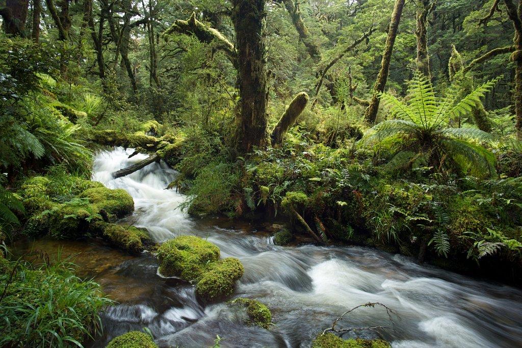 Moos, Farne, Baumfarne und Wasser